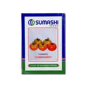 buy hybrid tomato seeds