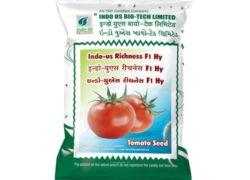 RICHNESH F1 HYBRID TOMATO – INDO-US Seeds