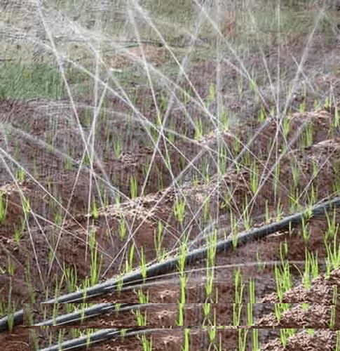 rain hose
